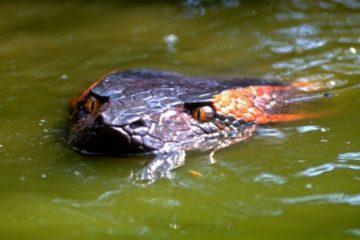 film ular terbaik - anaconda